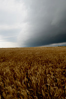 wheat and storm clouds